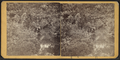 View in Prospect Park, from Robert N. Dennis collection of stereoscopic views 4.png