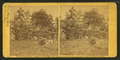 View of breast-works on Round Top, Gettysburg, by Gibson, James F., b. 1828.png