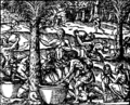 Vin de palme Thevet 1557 20v.png