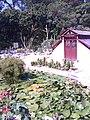 Vista da área de fora da estufa de plantas espinhosas do Jardim Botânico.jpeg