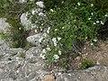 Vora el riu Glorieta a Mont-ral P1260719.jpg