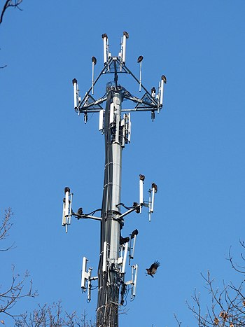 English: Turkey Vultures roosting on microwave...