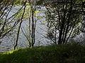 Vylet k Cernemu jezeru Sumava - 9.srpna 2010 171.JPG