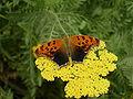 WPZ Butterflies & Blooms 06.jpg