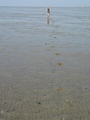 Mudflat hiking - Mudflat hiker in Wadden Sea near Wilhelmshaven, Germany