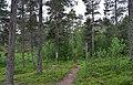 Walking trail, Inari, Finland (3) (35874420813).jpg