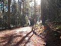 Wandern im November in Todtmoos - panoramio (3).jpg
