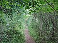 Wanderweg - panoramio (53).jpg