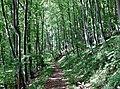 Wanderweg zum Blaufels 653 m. ü. NN - panoramio.jpg