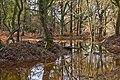 Warwickslade Cutting, flood plain - geograph.org.uk - 1582655.jpg