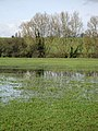 Water logged field - geograph.org.uk - 357959.jpg