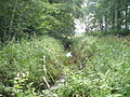 Weitenhagen-Grubenhagen Schwinge Sept-2011 SL276661.JPG