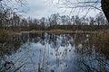 Westerbroek - natuurgebied (4).jpg
