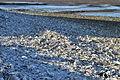 Westport, WA - shells outside Brady's Oysters 03.jpg