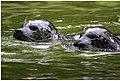 Wettschwimmen (15719906995).jpg