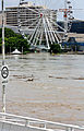 Wheel of Brisbane and the flooded Brisbane River.jpg