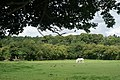 White Horse at Chawton, Hampshire - geograph.org.uk - 1417282.jpg