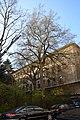 Wiener Naturdenkmal 692 (Währing) f.JPG