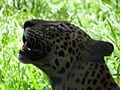 Wild life at zoo 27.jpg