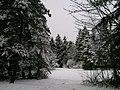 Winter im Wald - panoramio (1).jpg