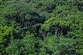 Wood Nature (262225673).jpeg