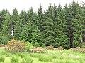 Woodland beside the Catter Burn - geograph.org.uk - 2107412.jpg