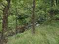 Woodland by the Afon Doethie - geograph.org.uk - 928657.jpg