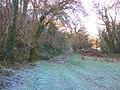 Woodland path, beside the River Dart - geograph.org.uk - 1625567.jpg