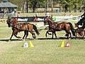 World Equestrian Games Driving 04.jpg