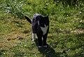 Wraxall 2012 MMB 11 Smudge.jpg
