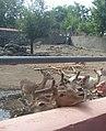 Yerevan Zoo 25.jpg
