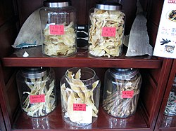 Shark fins and other shark parts for sale in a Chinese pharmacy