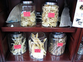 Shark fin soup - Shark fins and other shark parts for sale in a Chinese pharmacy in Yokohama, Japan