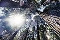 Yosemite Magic (14515082666).jpg
