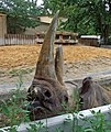 Zoo-nashorn-ffm011.jpg