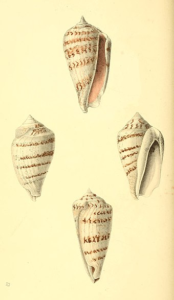 Zoological Illustrations Volume I Plate 53.jpg