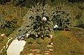 Édouard Vuillard - La Cueillette.jpg