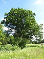 Švenčionių sen., Lithuania - panoramio (29).jpg