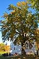 Багатовіковий дуб, м. Чернігів, парк ім. Коцюбинського.jpg