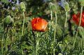 Ботанический сад, Минск - panoramio (5).jpg
