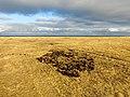 Випасаня овець в Тарутінському степу.jpg