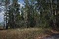 В северо-восточном направлении - panoramio (1).jpg