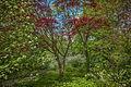 Дворцовый сад весной.jpg