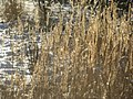 Зимние травы - panoramio.jpg