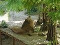 Лев в Миколаївському зоопарку,.jpg