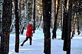 Неспешная лыжная прогулка.jpg