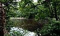 Озеро у Польському лісі.jpg