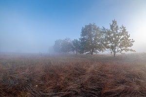 Туманний ранок у Бобровні.jpg