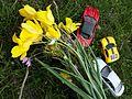 Тюльпаны Казахстана 06.jpg