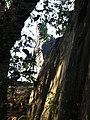 Чигірин (дивний ракурс) - panoramio.jpg